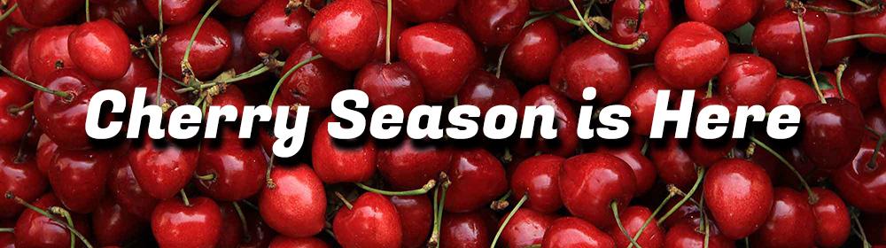 Harvest Time Cherry Season