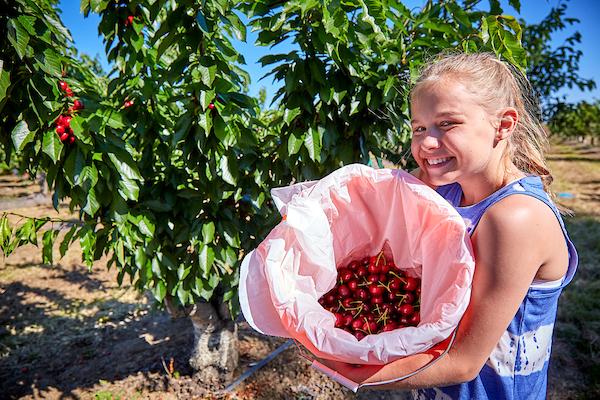 Harvest Time U-Pick Farm