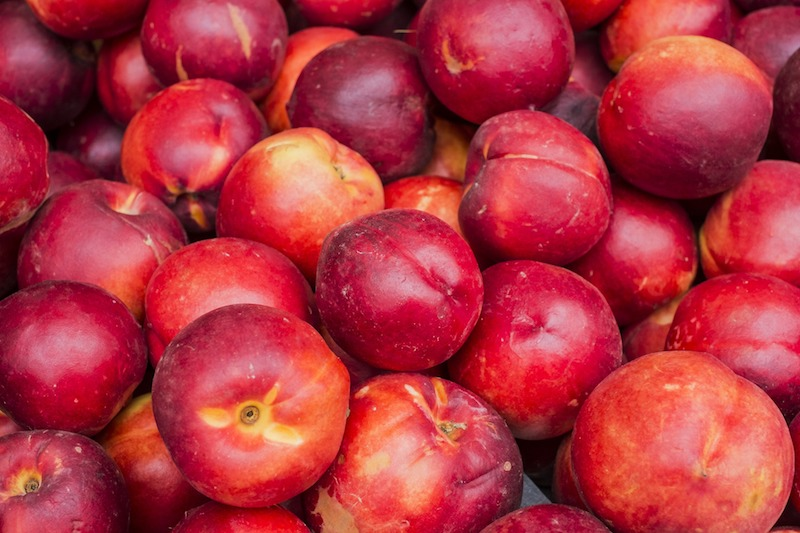 nectarines- harvest time brentwood