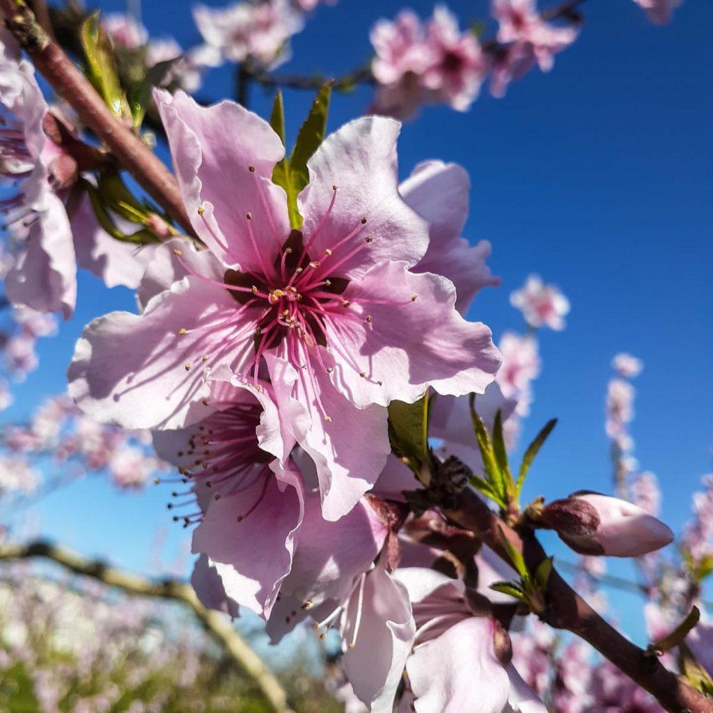 Urban Edge Farms - Spring Blossoms