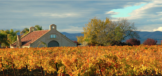 Tamayo Vineyards