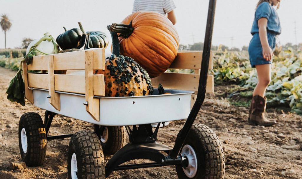 G&S Farms - Fall Harvest