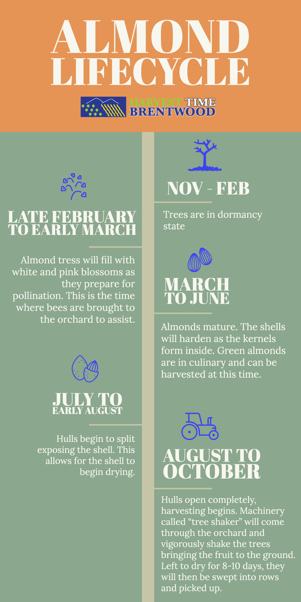 Almond Lifecycle Chart - Harvest Time