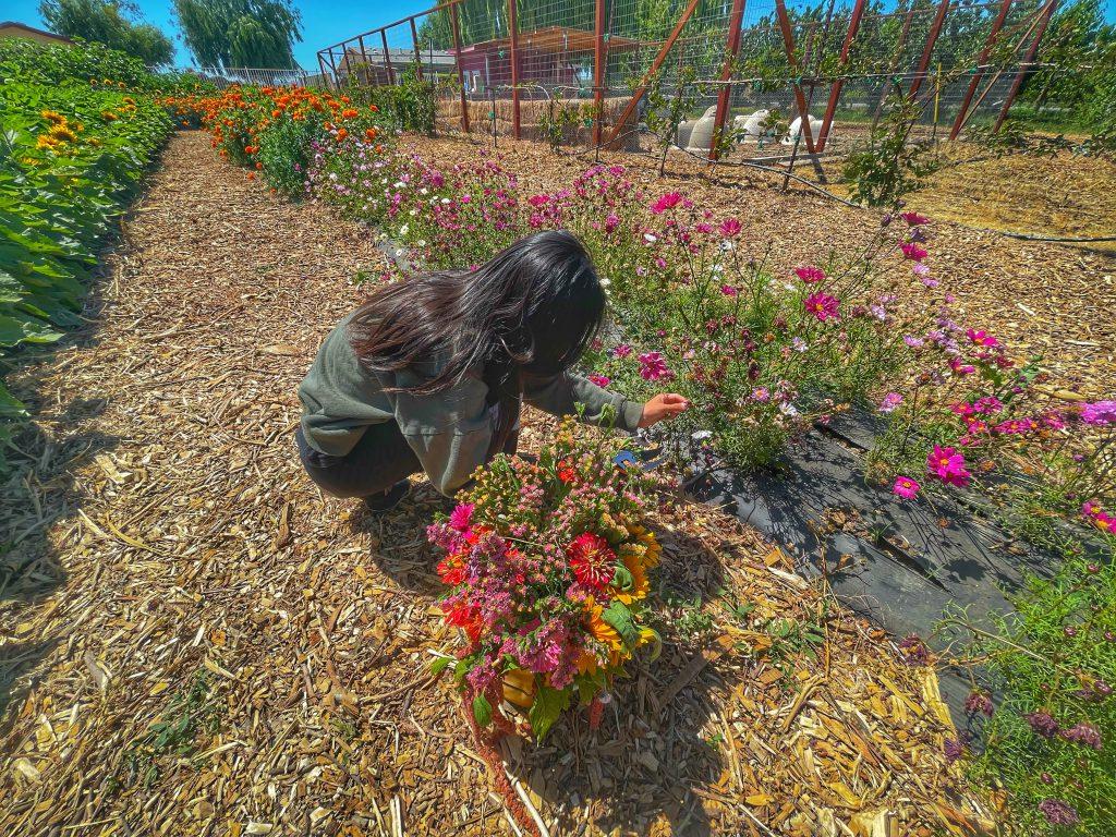 U-Pick Flowers at Urban Edge Farm Store